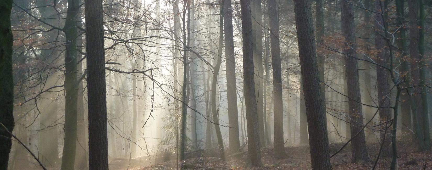Wald_2