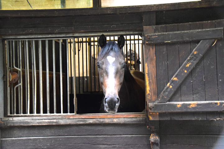 HRV_Impressionen_Pferd_Box